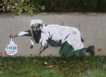 Osama in Killarney - Vango